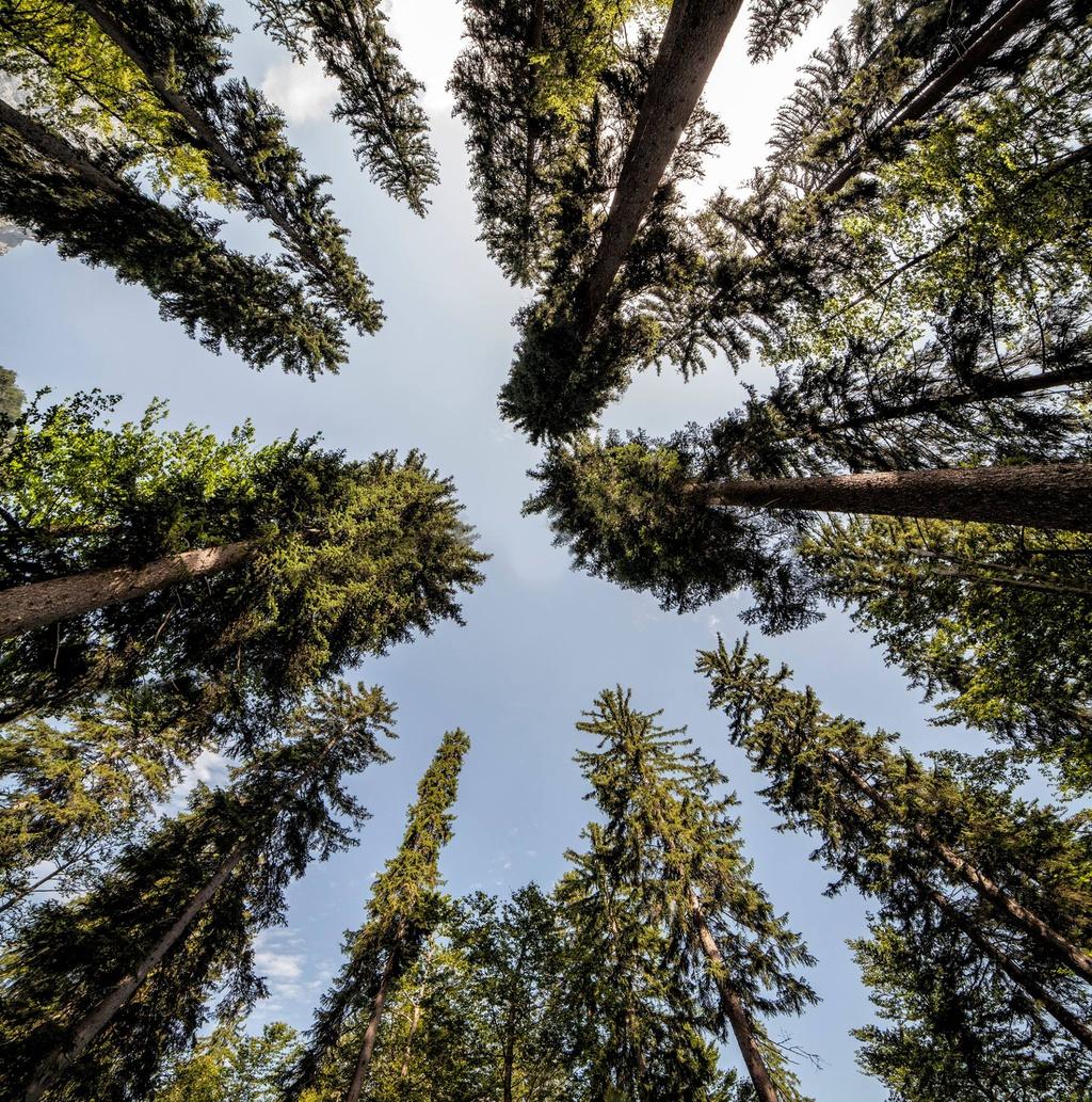 Foresta degli Abeti di Risonanza, Valbruna (UD)